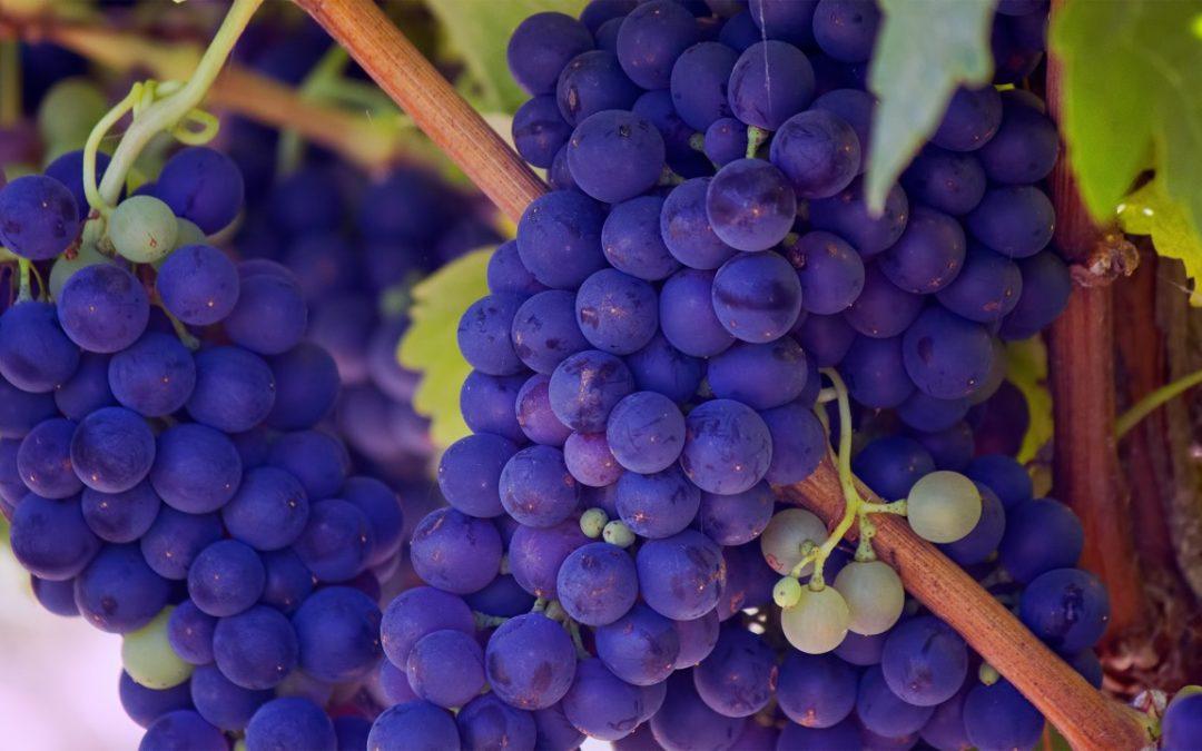 Was sind Antioxidantien und was tun sie für Dich ?